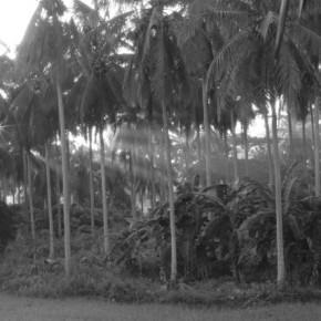 Island scene
