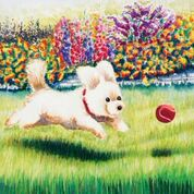 White dog with red collar running on grass after a red ball. Colored flowers behind him.