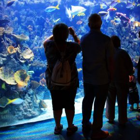 people-inside-aquarium-11284544185Kf9W