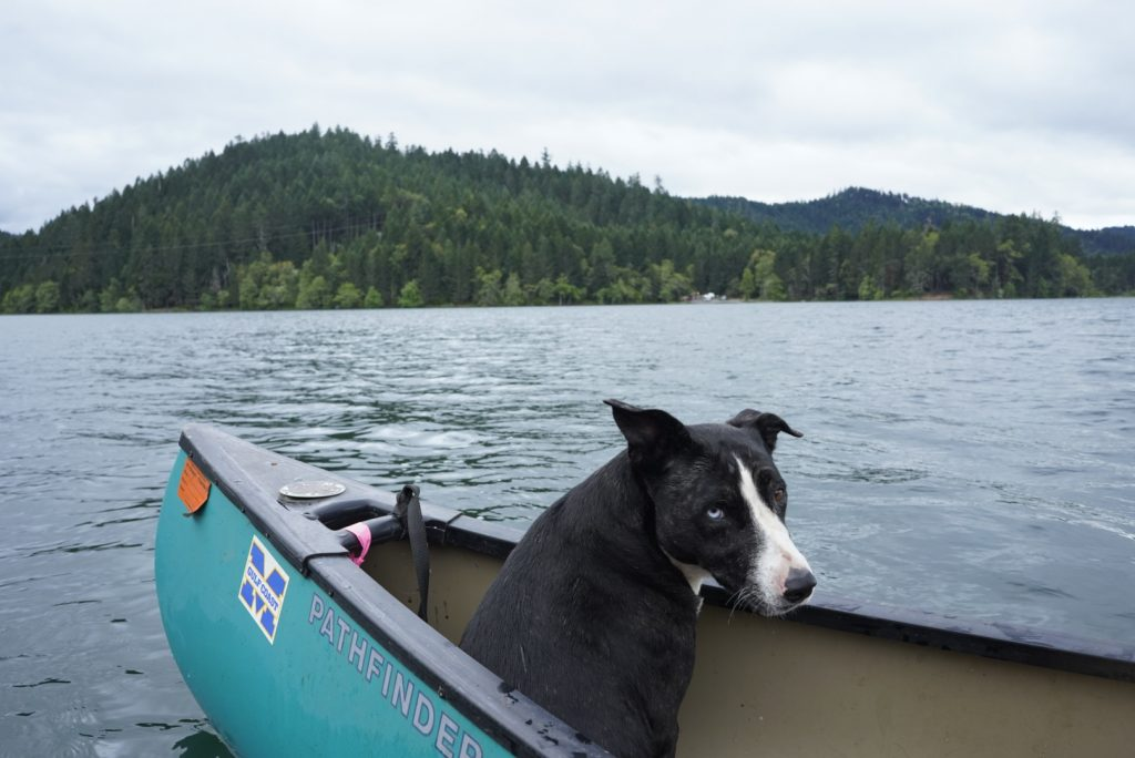 Black dog inside a small boat out on a lake, hills and trees in the distance.