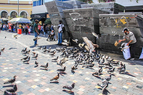 Several people of varying ages standing in front of a building feeding a flock of pigeons in a city