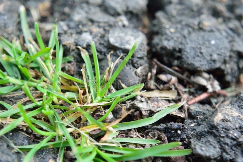Green grass growing in cracks in gray asphalt.