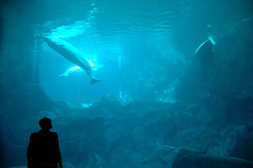 Nondescript person in the shade observing a dolphin underwater in an aquarium.